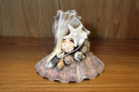Conch Shell Centerpiece