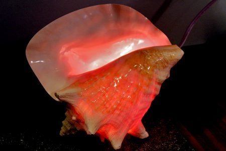 Conch Shell Light