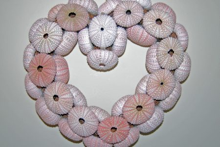 Sea Urchin Shell Wreath Front View
